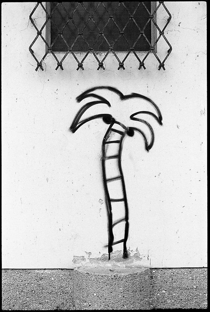 palm beach (III)